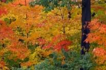 Fall Foliage Excursion